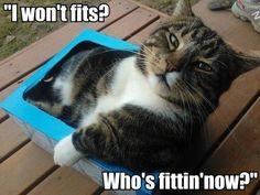 Who's fittin now!