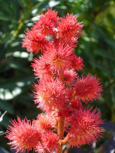 Exotic Flowers   45 Beautiful Exotic Flowers Pictures   Psdeluxe