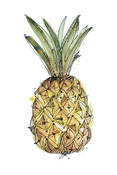 a fruity illustration series, a fast sketch watercolor drawing of a juicy pineapple www.claudia-melchordelrio.tumblr.com