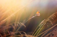 https://flic.kr/p/Gwyoek   Arethusana arethusa   Nikon 50mm, 1.8 G lens   Thanks…