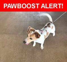 Is this your lost pet? Found in Katy, TX 77493. Please spread the word so we can find the owner!  White dog with brown spots. She had a pink collar, looks young. She is definitely a mixed breed and has a long body like a corgi.   Nearest Address: Elyson Falls Drive, Katy, TX