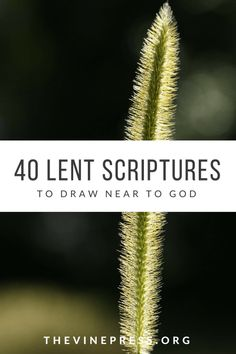 40 Scriptures for Lent - The Vine Press, printable. Bible reading plan.