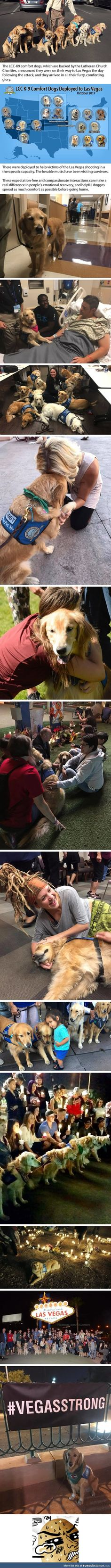 These dogs are helping people deal with the trauma of the Las Vegas shooting