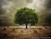 Artikel über die Nachhaltigkeit von #Biomasse und #Bioenergie