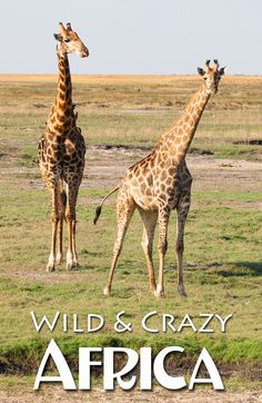 Wild and Crazy Afric