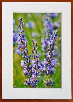 LAVENDER MACRO Mini PrintLavender Print Farmhouse Decor