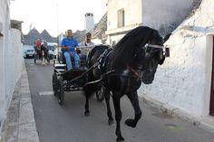 Murgese horse through Alberobello's streets