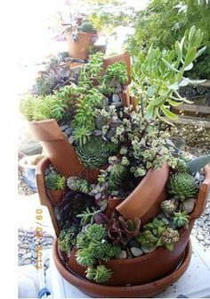 Great idea for succulents! Bring them in during the cold Canadian winters!!