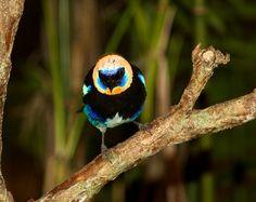 Birds of Costa Rica 2