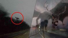 Assustador: Homem na Pensilvaniana consegue tirar foto do terrível ''Diabo de Jersey'' ~ Sempre Questione