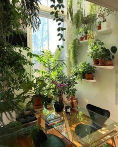 Como ter plantas em casa: ideias atuais para adotar a tendência da floresta urbana
