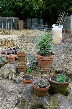 nice herb garden / http://www.everydaygardening.net/herb-garden-120/