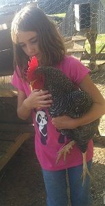 Reasons to Raise Chickens http://www.backroadsliving.com/reasons-to-raise-chickens/