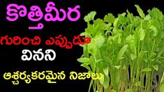 Benefits Of Eating Coriander Leaves | కొత్తిమీర గురించి వినని ఆశ్చర్యకరమ...