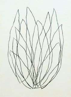 Love the hand drawn feel. Has a not so literal feel which I like. Flor Protea, Protea Art, Line Drawing, Painting & Drawing, Illustrations, Illustration Art, Ligne Claire, No Rain, Contemporary Artists