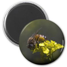 Busy Bee Fridge Magnet by Florals by Fred #zazzle #gift #photogift
