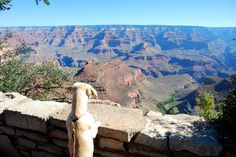 Even dogs are amazed by the views of the Grand Canyon
