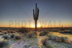 Desert Sunset - Fototapeter & Tapeter - Photowall