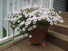 Container Garden Design - Planting  Learn how many plants are needed for a container garden and how to place those plants for maximum effect.