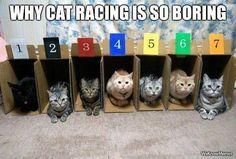 cat racing......
