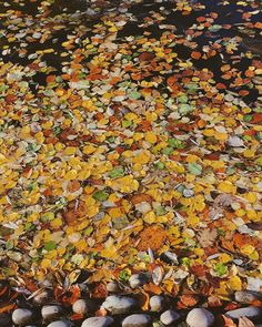 beautiful fall leaves in different colours, a visit to Sunderland