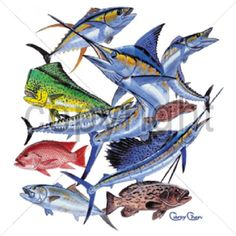 Saltwater Fish Collage HEAT PRESS TRANSFER for T Shirt Sweatshirt Fabric #248e #AB