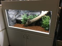 Caring For Bearded Dragons Must Know Tips For Owners Bearded Dragon Habitat, Bearded Dragon Cage, Reptile House, Reptile Room, Paludarium, Vivarium, Pond Animals, Animals And Pets, Leopard Gecko Habitat