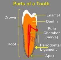 Chris Materjohn Dentist