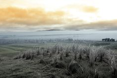 Fog rolling into the graveyard next to Ballybunion golf course in county Kerry Ireland West Coast Of Ireland, More Images, Halloween Photos, Country Roads, Mountains, Travel, Beautiful, David, Autumn