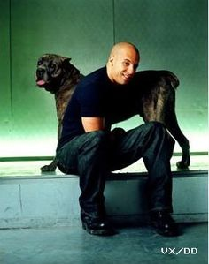 Vin Diesel Cane Corso Italian Mastiff - it figures! Vin Diesel, Cane Corso Italian Mastiff, Cane Corso Dog, Big Dogs, I Love Dogs, Mans Best Friend, Best Friends, Dominic Toretto, Celebrity Dogs