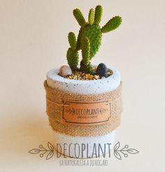 """Este hermoso cactus con """"hijuelos"""" , lleva el nombre del volcán Incahuasi. Plantado en maceta de concreto decorado con piedras decorativas y arpillera."""