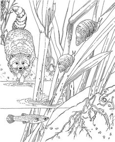 Coloring Pages For Adults Only   adult coloring pages printable coupons work at home free coloring ...