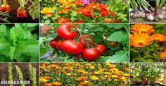 Μωσαϊκό: Ποια Φυτά ΔΕΝ Πρέπει να Φυτεύονται Δίπλα-Δίπλα