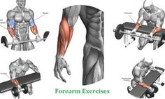 Forearm Workouts - Best 4 Exercises to Build Forearms