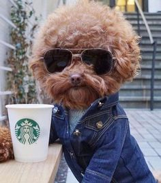 Hipster 70s Dog at Starbucks sunglasses denim
