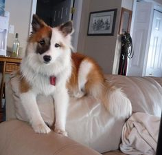 Image result for small mutt dog