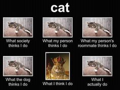 I don't even own a cat - so why do I like cat pics (because believe me, I don't want one)