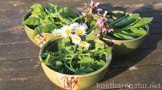 Kulinarische Frühjahrskur: Frühlingsquark mit frischen Wildkräutern