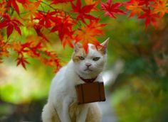 Twitter / nyalan_jalan: 秋ですにゃ〜。
