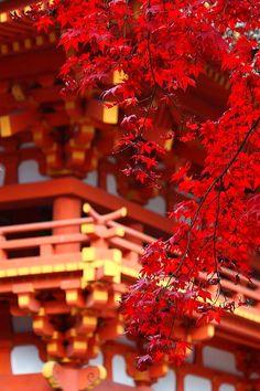 上賀茂神社の紅葉 - kamigamo shrine,kyoto