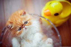 Beautiful cat images Beautiful Cat Images, Most Beautiful, Cats, Animals, Gatos, Animales, Kitty Cats, Animaux, Cat