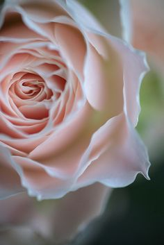 Beautiful Pastel Serene Rose | by Rosemary* on Flickr