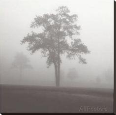 Fog Tree Study I Stretched Canvas Print