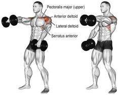 Alternating dumbbell front raise guide and video - Dumbbell - Ideas of Dumbbell - Alternating dumbbell front raise. Main muscles worked: Anterior deltoid Lateral Deltoid Clavicular Pectoralis Major Middle and Lower Trapezii and Serratus Anterior. Fitness Workouts, Sport Fitness, Muscle Fitness, Fun Workouts, Gain Muscle, Corps Fitness, Fitness Abs, Best Shoulder Workout, Front Raises