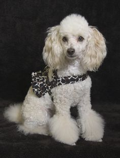 Gabriela Is Wearing A Daisy Mae Ruffle Harness With Matching