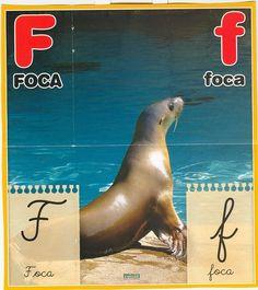 Material educativo para maestros: Abecedario con imagenes reales Polar Bear, Animals, Board, Color, Index Cards, School, Activities, Animais, Animaux