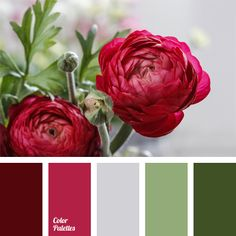 "Palette A vibrant mix of raspberry-red shades with muted ""dusty"" shades of green will look very good in a classic living room.A vibrant mix of raspberry-red shades with muted ""dusty"" shades of green will look very good in a classic living room. Colour Pallette, Colour Schemes, Color Patterns, Color Combos, Green Palette, Cores Rgb, Green Colors, Colours, Red Green"