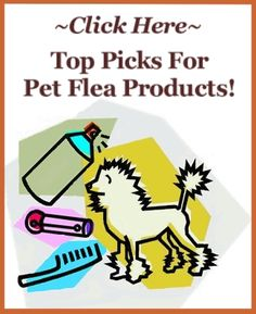 Have you heard that vinegar kills fleas? For a natural approach, some say it's the best flea killer around! Use it for a natural, homemade flea killer.