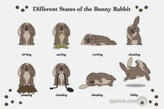 Different States of the Bunny Rabbit.