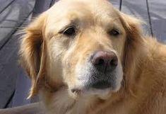 Escadas para Cães - Escadas para cachorros - Pet escadas: cão idoso, como fazer seu cão feliz